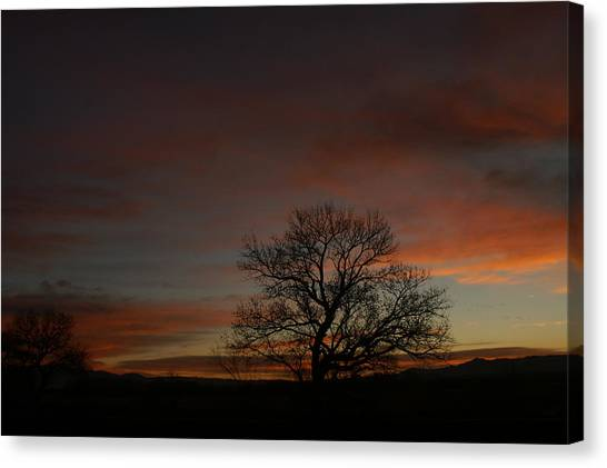 Morning Sky In Bosque Canvas Print