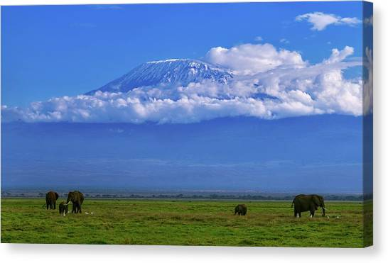 Mount Kilimanjaro Canvas Print - Mount Kilimanjaro by Babak Tafreshi