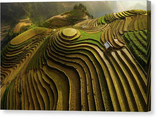 Vietnamese Canvas Print - Mu Cang Chai - Vietnam by ????o T???n Ph??t