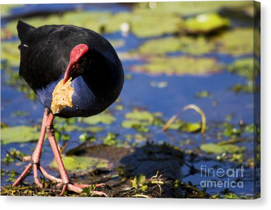 Stuffing Canvas Print - Multigrain Thief by Jorgo Photography - Wall Art Gallery