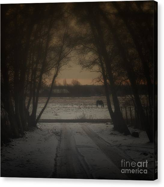 Foggy Forests Canvas Print - My Dark Forest by Stelios Kleanthous