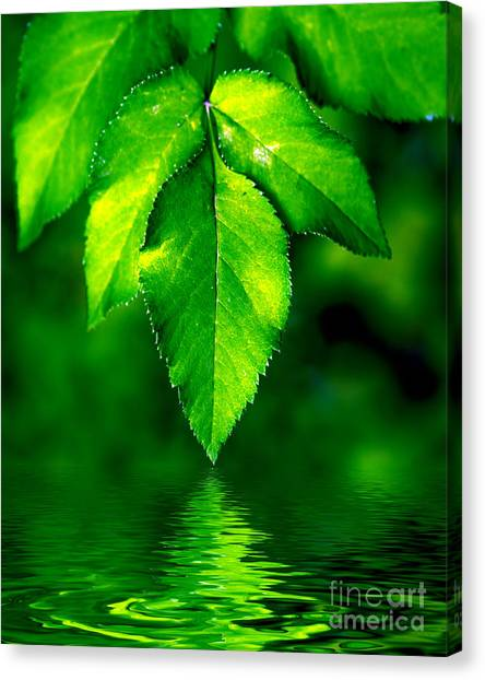 Natural Leaves Background Canvas Print