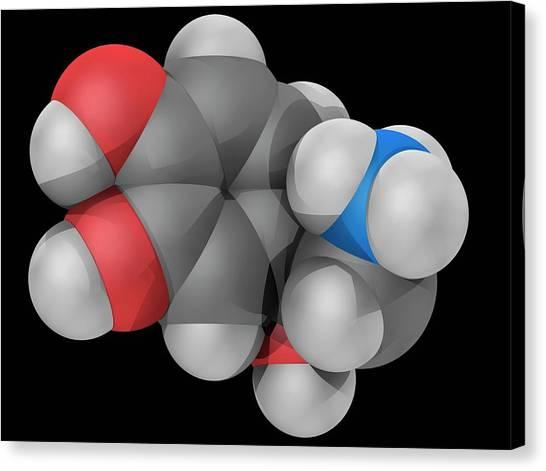 Norepinephrine Molecule Canvas Print by Laguna Design/science Photo Library