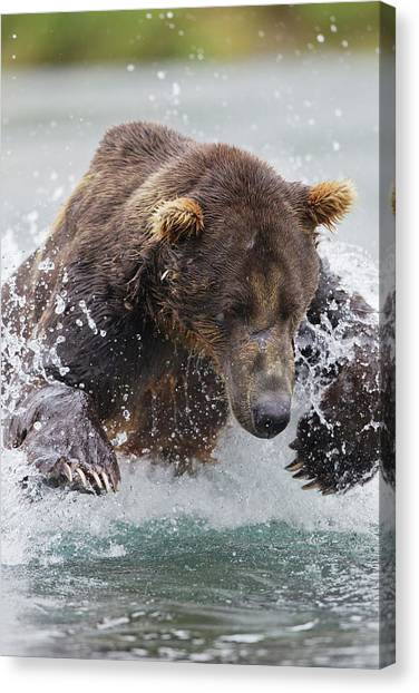 Carnivore Canvas Print - North America, Usa, Alaska, Geographic by Joe and Mary Ann Mcdonald