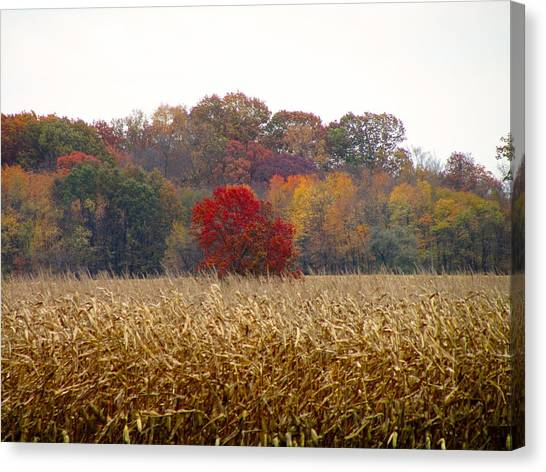 November Canvas Print by Andrea Dale