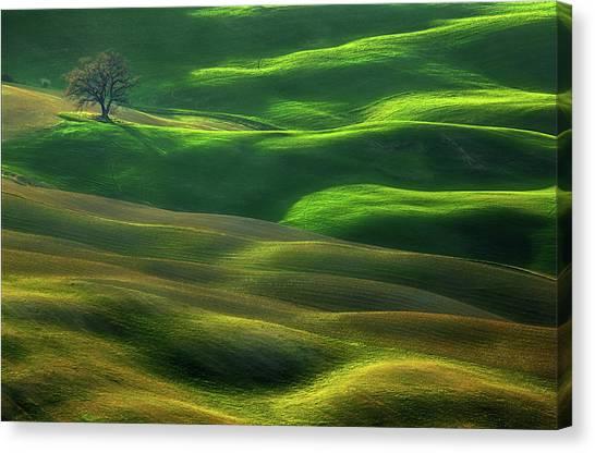 Oak Trees Canvas Print - Oak... by Krzysztof Browko