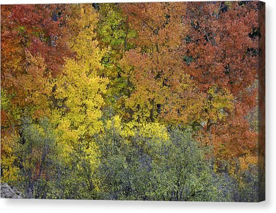 Ode To Autumn  Canvas Print