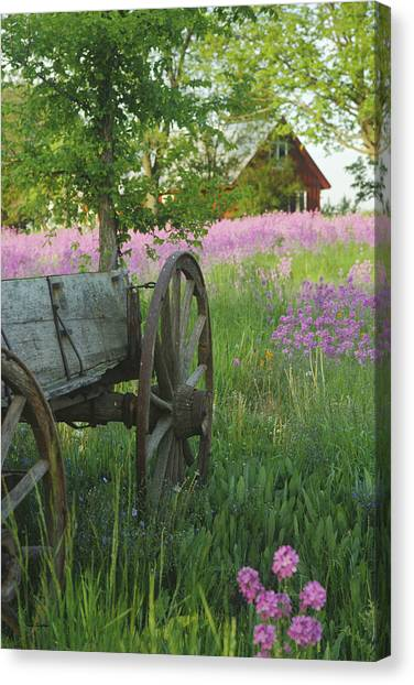 Old Buckboard Canvas Print