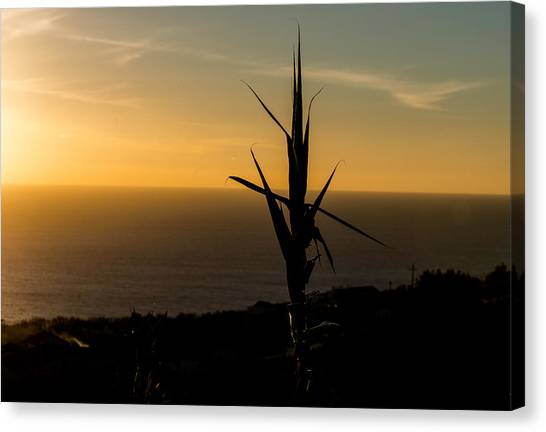 One At Sunset Canvas Print