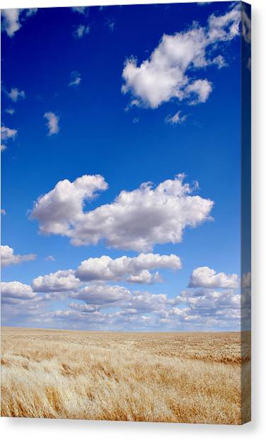 Openness Canvas Print