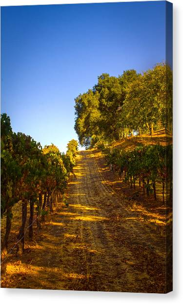 Opolo Winery Canvas Print