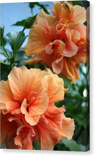 Orange Hibiscus Pair Canvas Print