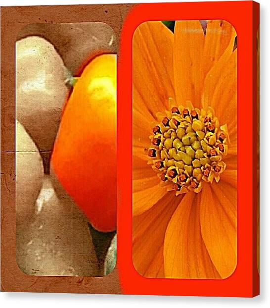 Pepper Canvas Print - Orange Wednesday by Katrise Fraund