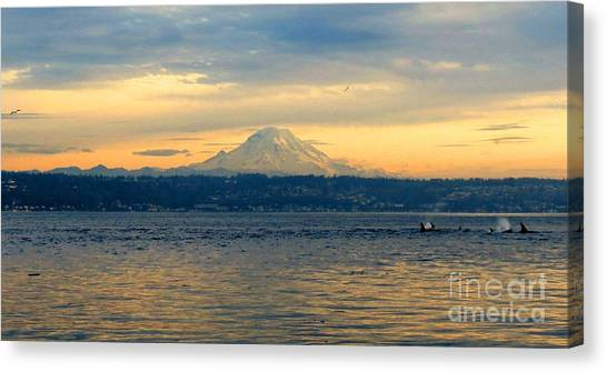 Orca Family And Mt. Rainier Canvas Print