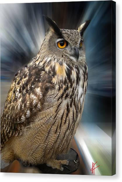 Owl Alba Spain  Canvas Print