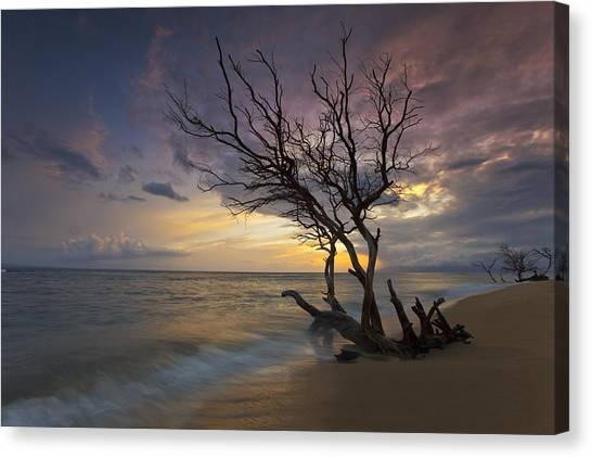 Fallen Tree Canvas Print - Painted Tree by James Roemmling