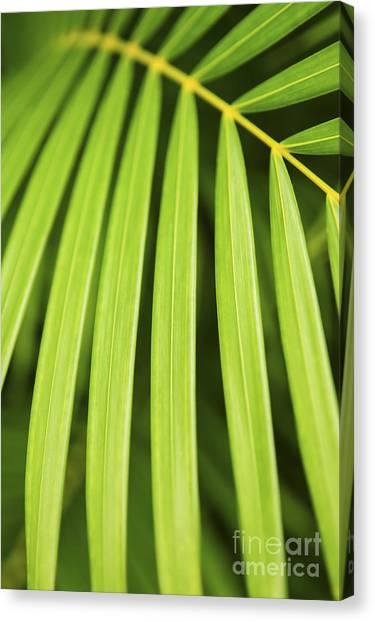 Tropical Plant Canvas Print - Palm Tree Leaf by Elena Elisseeva