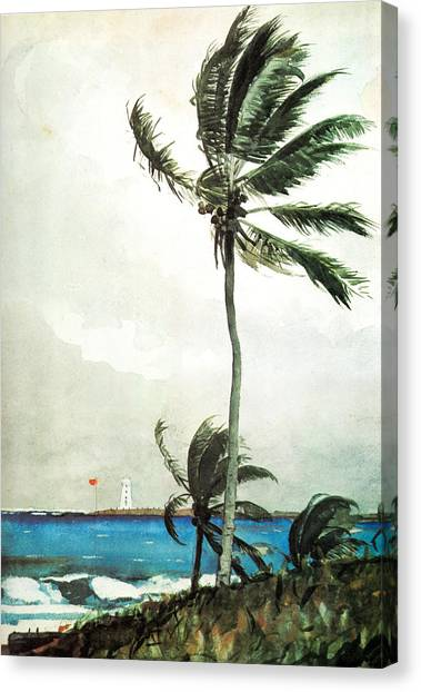 Palm Tree Nassau Canvas Print