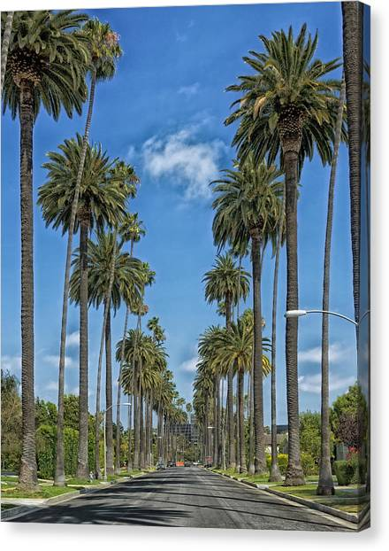 Beverly Hills Canvas Print - Palms Of Beverly Hills by Mountain Dreams