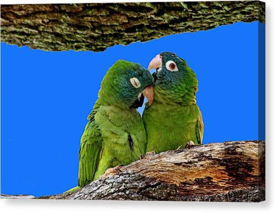 Parakeet Pair Canvas Print