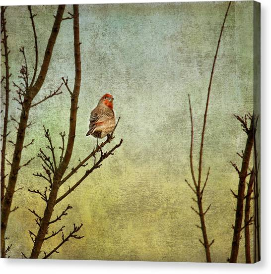 Finches Canvas Print - Perched by Rebecca Cozart