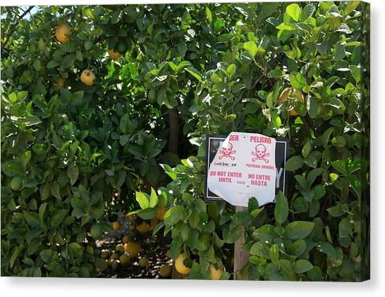 Orange Tree Canvas Print - Pesticide Warning Sign by Jim West