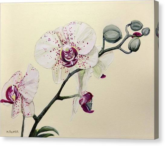 Phalaenopsis Black Panther Orchid Canvas Print