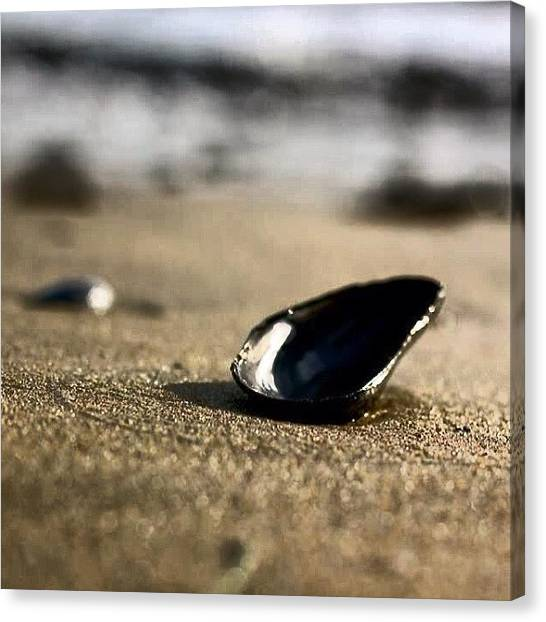 Seashells Canvas Print - #photooftheday , #canont2i , #50mm by Tony Martinez