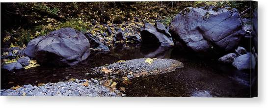 Fallen Leaf Canvas Print - Pilot Creek In Autumn, Humboldt County by Panoramic Images