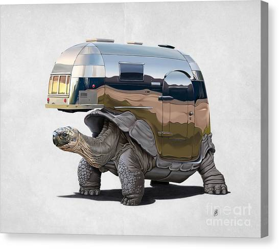 Tortoises Canvas Print - Pimp My Ride Wordless by Rob Snow