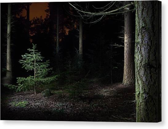Newts Canvas Print - Pine Trees New Life by Dirk Ercken