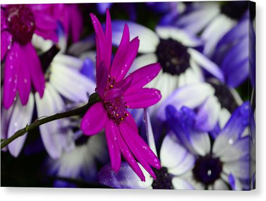 Pink Flower Canvas Print by Barbara Walsh