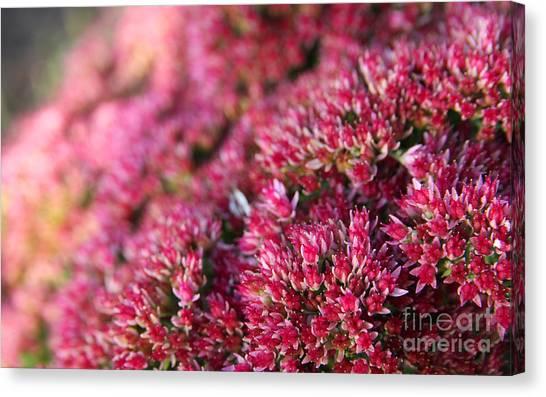 Pink Flower Bouquet Canvas Print by Jolanta Meskauskiene