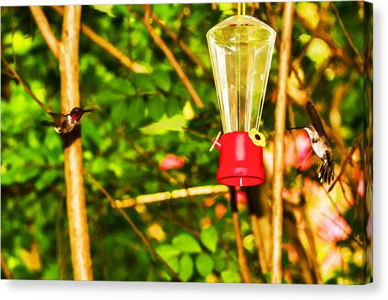 Hummingbirds - In Flight - Pit Stop Canvas Print by Barry Jones