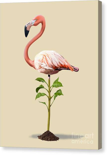 Flamingos Canvas Print - Planted Colour by Rob Snow