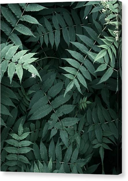 Plants In Forest Canvas Print by Alexandr Sherstobitov