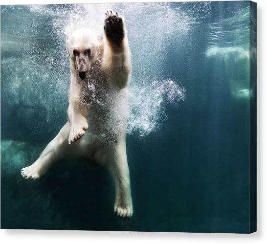 Polarbear In Water Canvas Print by Henrik Sorensen