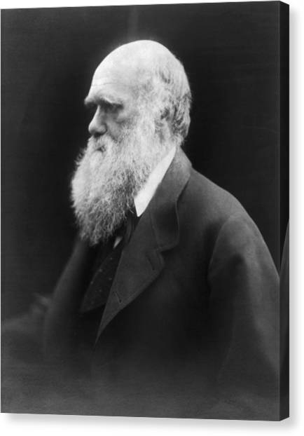 Head And Shoulders Canvas Print - Portrait Of Charles Darwin by Julia Margaret Cameron