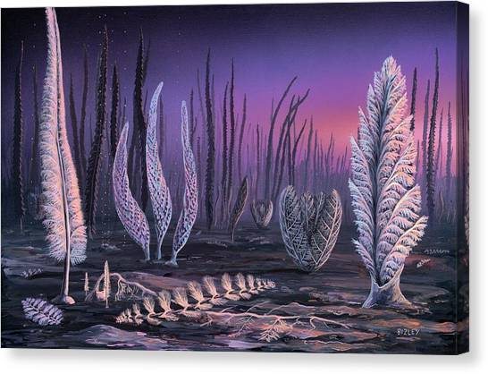 Pre-cambrian Life Forms Canvas Print by Richard Bizley