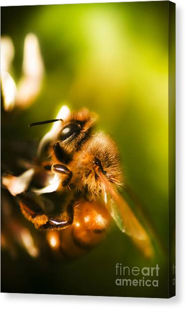 Pollinator Canvas Print - Process Of Pollination by Jorgo Photography - Wall Art Gallery