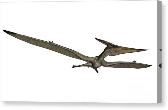 Pterodactyls Canvas Print - Pteranodon Flying Reptile by Elena Duvernay