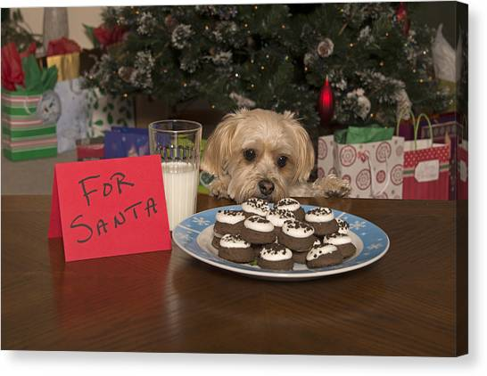 Puppy Checking Out Christmas Cookies Canvas Print