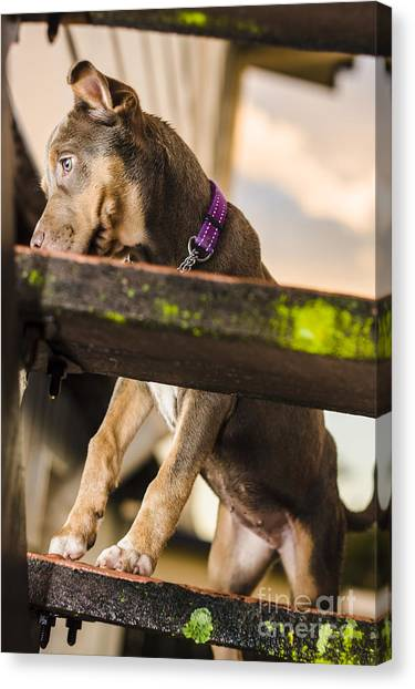 Rottweilers Canvas Print - Puppy Dog Walking Up Stairs In A Garden Backyard by Jorgo Photography - Wall Art Gallery