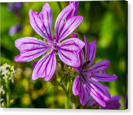Canvas Print featuring the photograph Purple Flower. by Gary Gillette