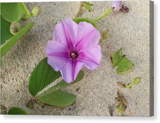 Bases Canvas Print - Purple Flower by Michael Kim