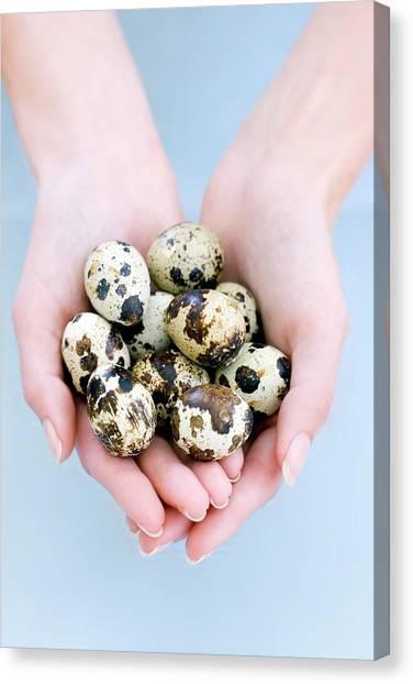Quail Eggs Canvas Print by Ian Hooton/science Photo Library