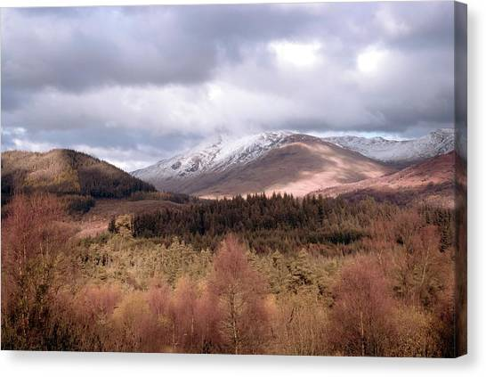 Queen Elizabeth Canvas Print - Queen Elizabeth Forest Park by Sam K Tran/science Photo Library