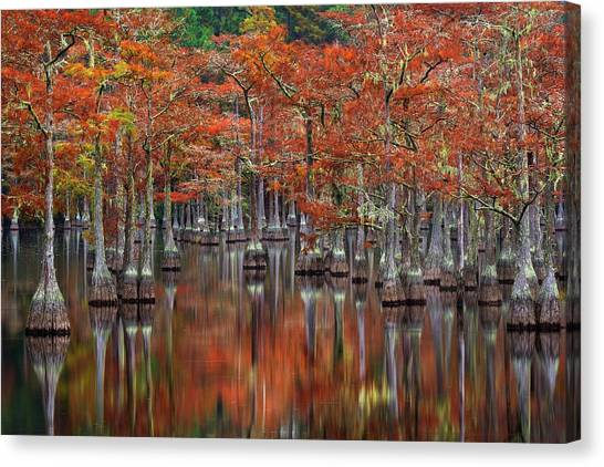 Swamps Canvas Print - Quiet Cove by Chris Moore