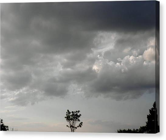 Rain On Me Said The Little Tree Canvas Print by Kate Gallagher