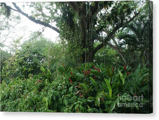 Rainforest At Ys River Canvas Print by Olaf Christian